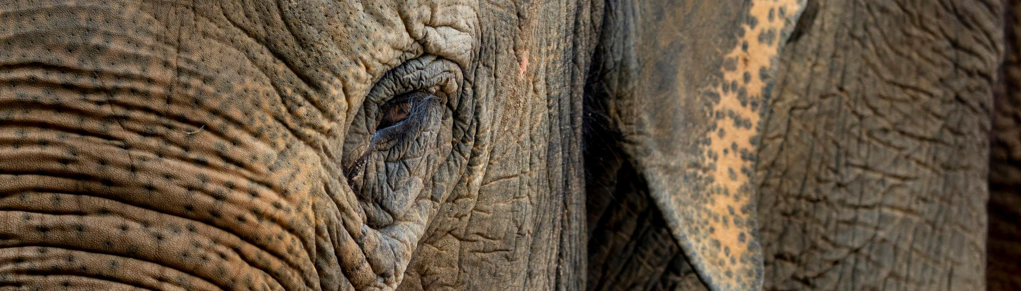 Close up view of elephants eye.