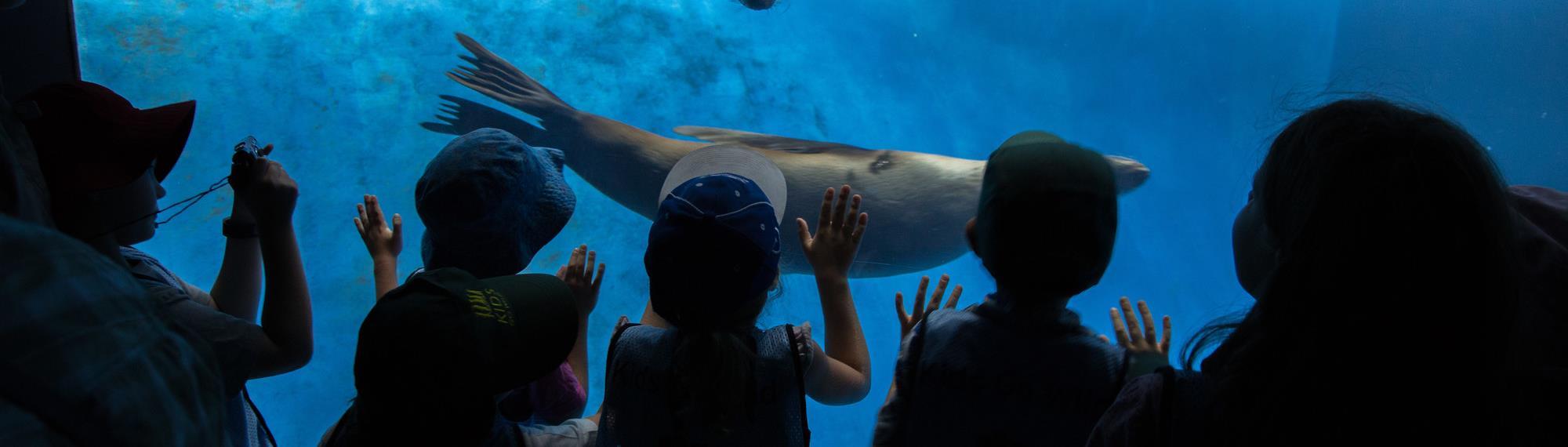 Silhouette of children watching seals swim via underwater glass window.