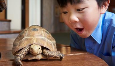 A young boy looks on in amazement at a tortoise on a bench.