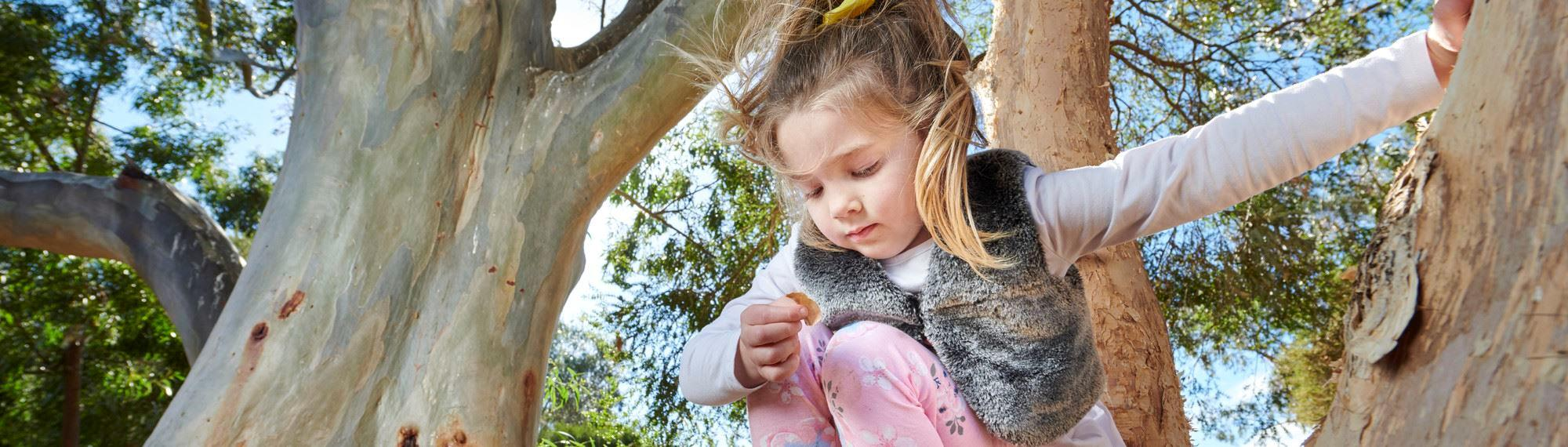 Young girl in a eucalyptus tree.