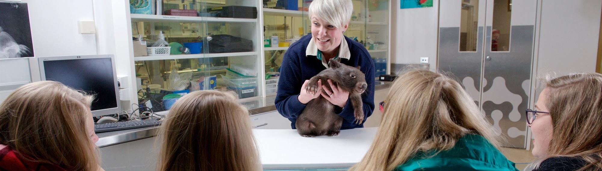 Female Vet nurse holding a young wombat on an examination table while four students look on.