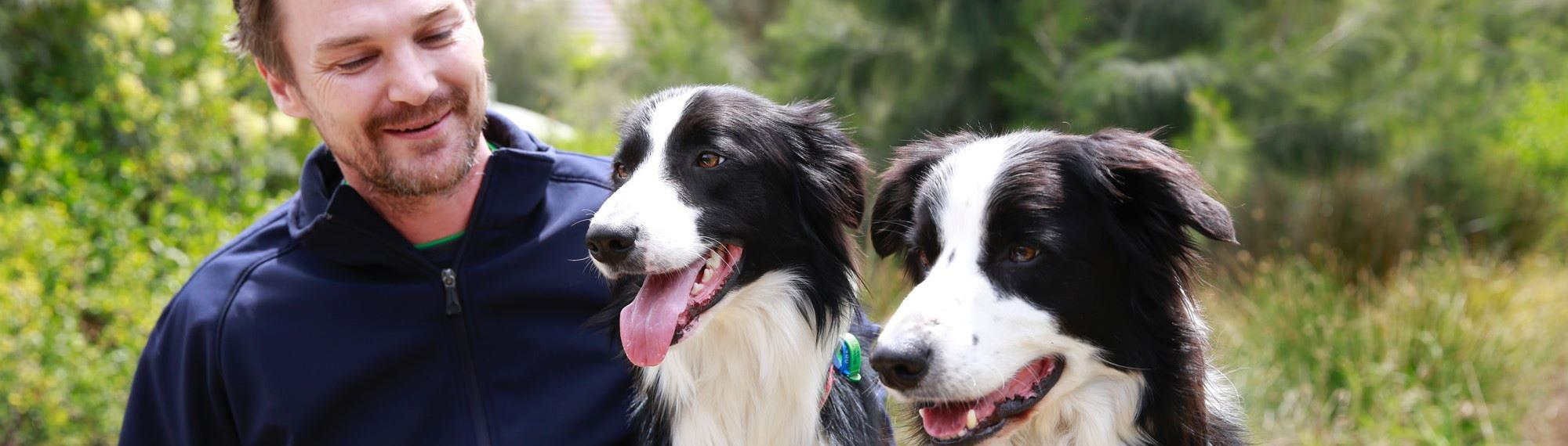 Two Border Collie faces looking towards camera while man looks at one of the dogs.