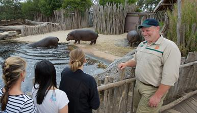 Staff member Davin giving the Hippo Presentation talk to three young visitors next to the hippo pond. Three hippopotamus are walking into the pond on the other side of the wooden fence.
