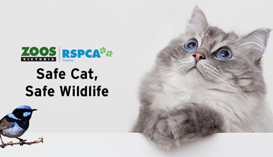 Safe Cat Safe Wildlife campaign sign. Image of grey fluffy cat on right side and a bright blue Superb Fairy Wren in the bottom lefthand corner.