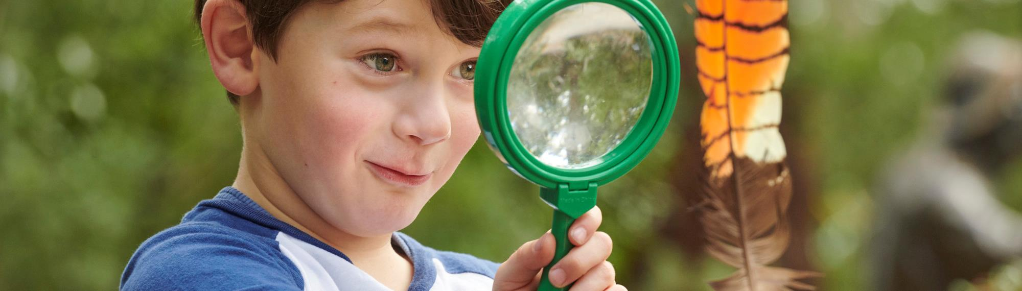 Kindergarten boy looking through a green magnifying glass to examine a brightly coloured orange and black striped feather.