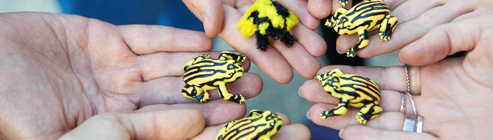 Five hands all holding a toy Corroboree Frog.