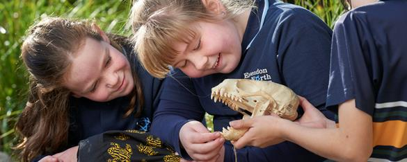 Three students examine an animal skull at Melbourne Zoo. Animal skull has mouth open and students are looking at and feeling the sharp teeth.