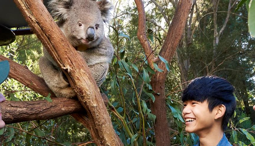 Two young people smiling as they look up at a koala in a tree at Healesville Sanctuary.