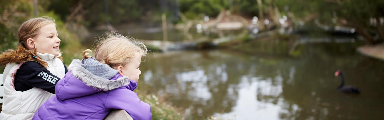 Two young girls lean over a fence. There is a wetland in front of them and a black swan swimming in the water.