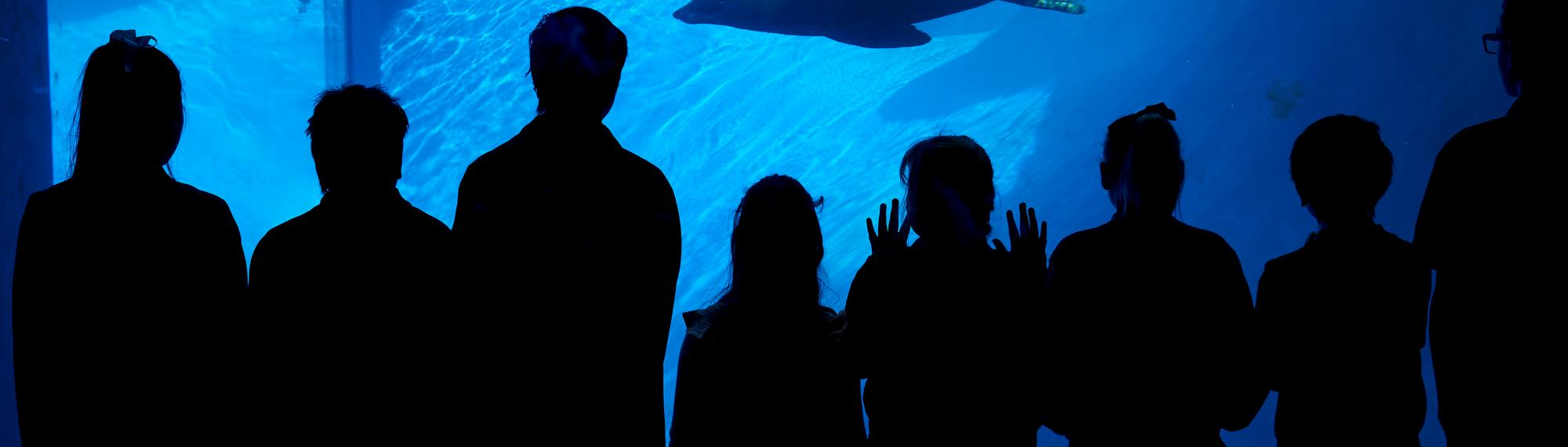 Silhouette of students looking through the under water viewing glass at a seal swimming by.