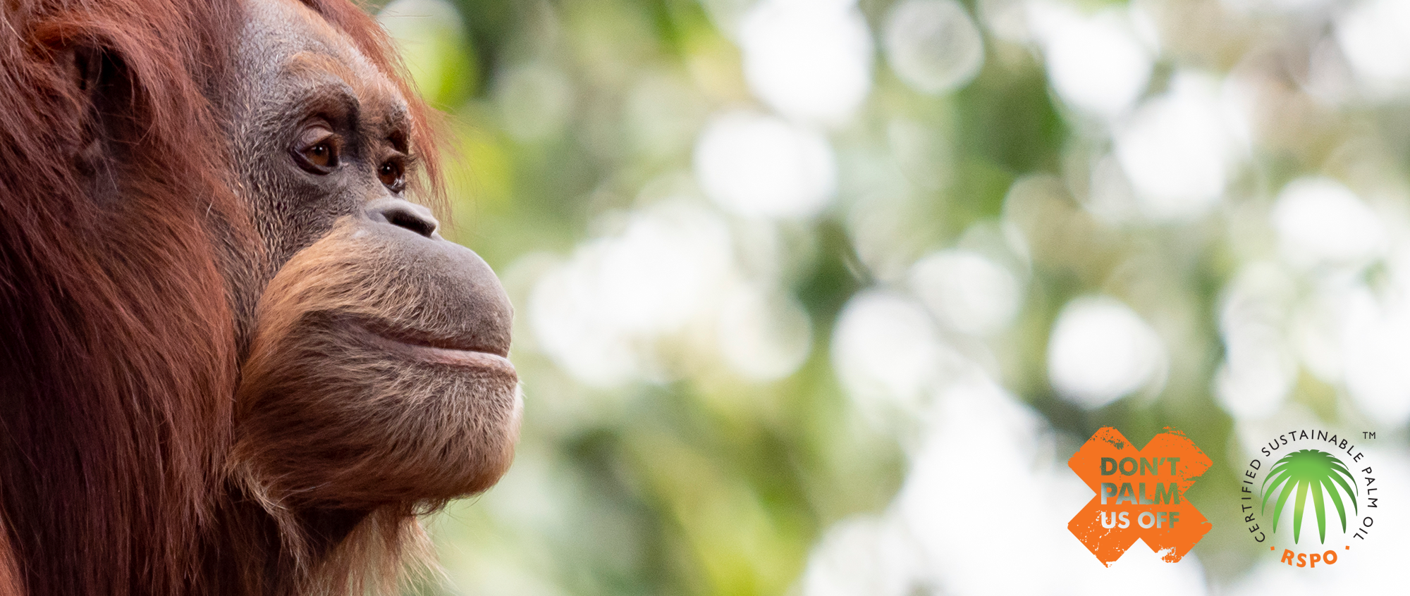 Dont Palm Us Off campaign sign with image of Orang-Utan face looking towards the right.