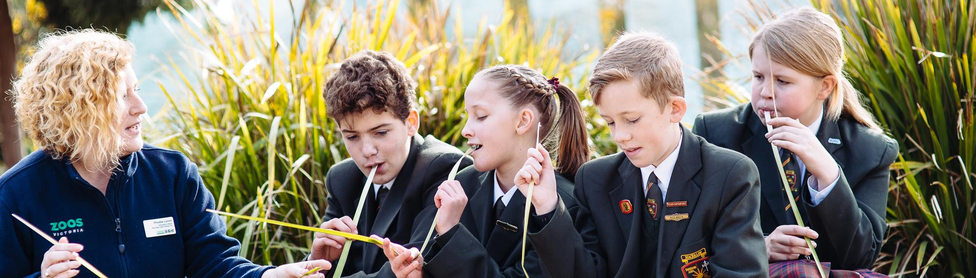 A female education officer at Werribee Zoo talking to four students while they chew native grass Lomandra.