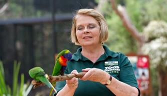 Volunteer holding branch with two lorikeets perched on it.