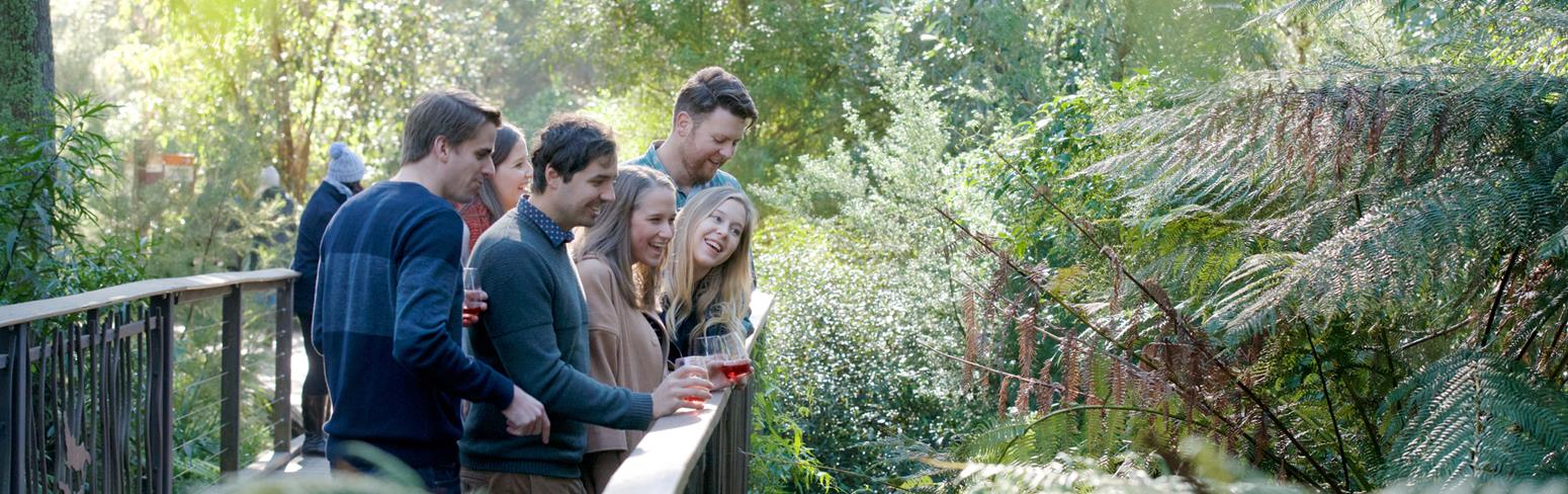 A group of people posing on a bridge with wine glasses, looking at the rain forest below.