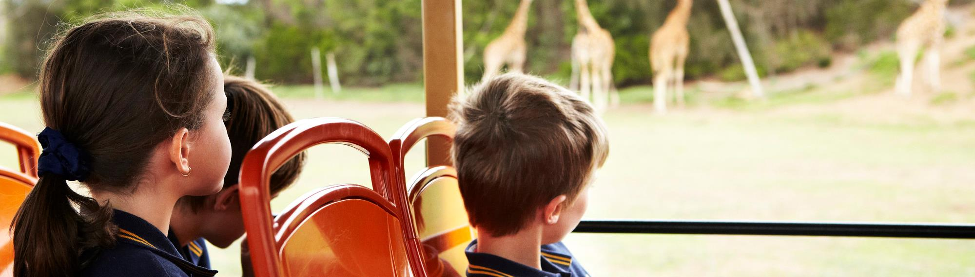Students sitting on orange seats watching giraffes in the distance on the safari bus at Werribee Open Range Zoo.
