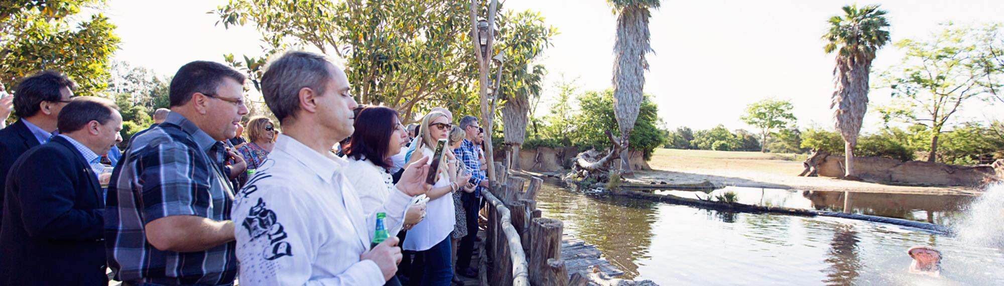 Crowd of visitors standing on the boardwalk taking photos over the fence of a hippopotamus submerged in the water. Only the hippo's open mouth can be seen above the water.