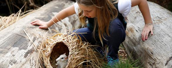 A girl crouching between two large logs looks into a grass nest which holds an Eastern Barred Bandicoot.