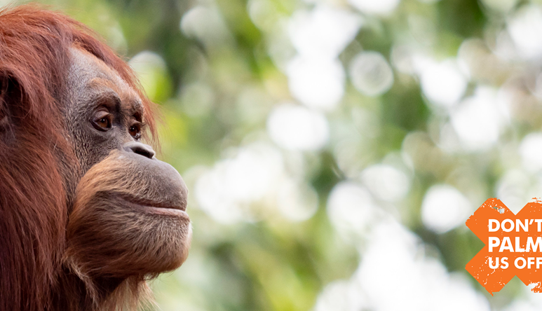 Orang-utan looking into distance with Don't Palm Us Off logo