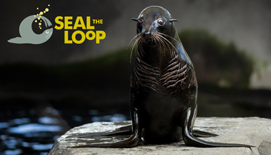 Seal The Loop campaign sign with image of a Seal on a rock looking towards the camera.