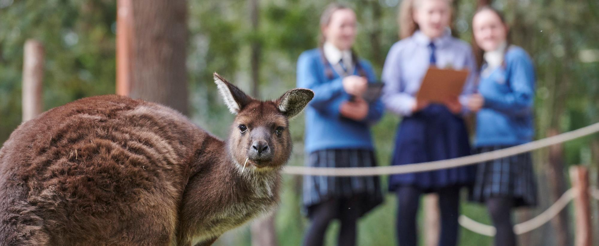 Kangaroo in foreground looking at camera while three students stand in background.