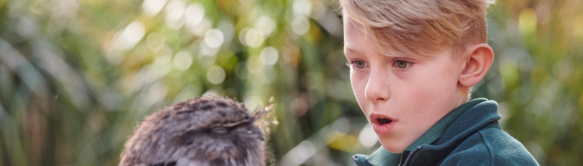 Young male student looking closely at a Tawny Frogmouth. His mouth is open and he is looking down at the head of the bird.