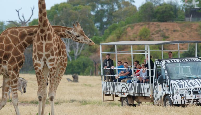 Dating Safari Melbourne